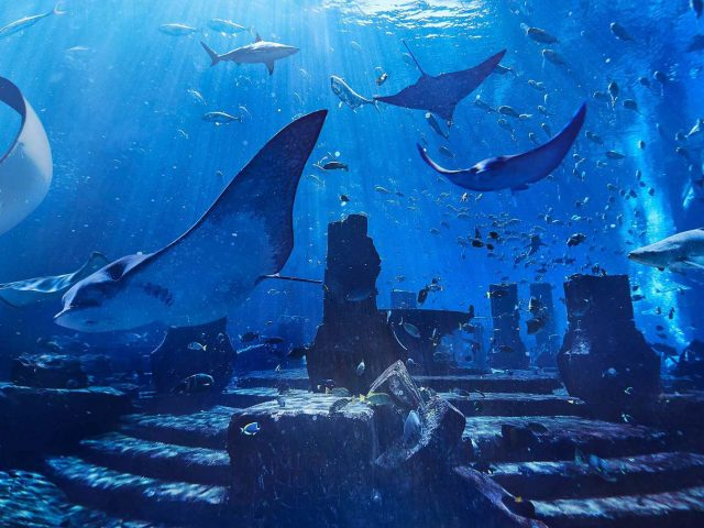 Advertisement: Emirates Visits Dubai Aquaventure Park 3 Air Journal