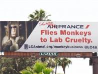air-journal_Air_France_LAC primates