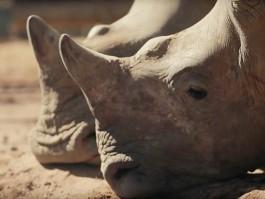 air-journal_British Airways rhino