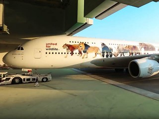 air-journal_Emirates Airlines wildflife A380