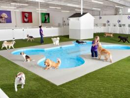 air-journal_New York JFK Ark dogs