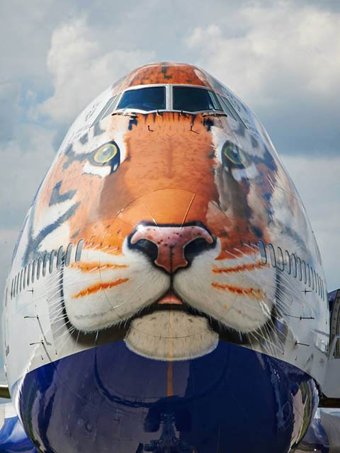 air-journal_Transaero tigre
