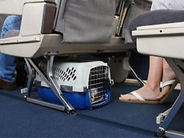 nouvelle collection 3a9a2 95489 Chien mort dans le compartiment bagage : United Airlines s ...