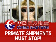 air-journal_primates china eastern