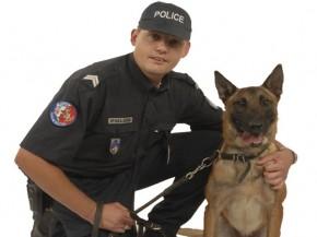 aj_police_chien